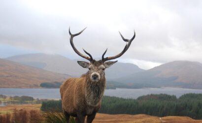 Vakantie Schotse Hooglanden